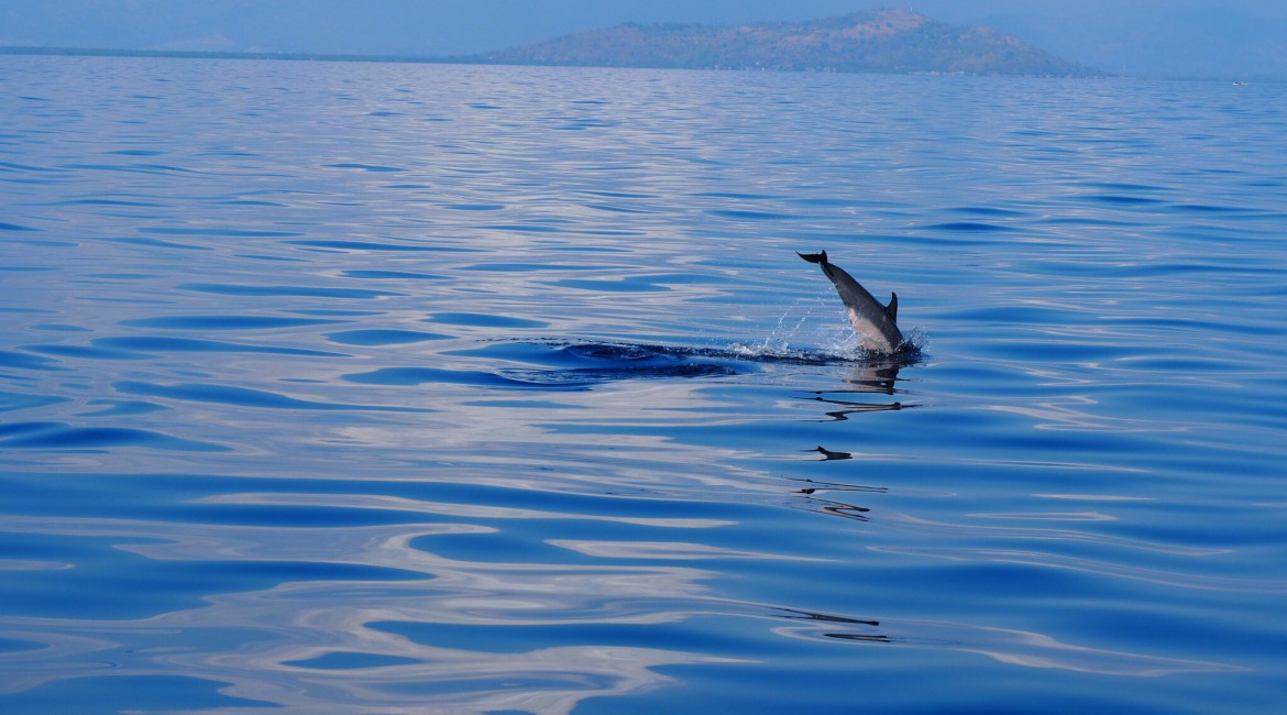 Dolphin Watching in Bais